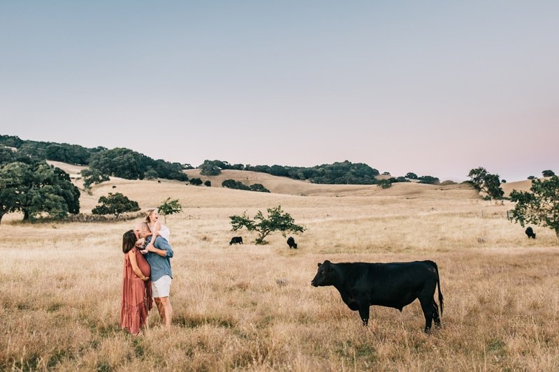 Maternity Photographer, family of three in a field with a cow next to them