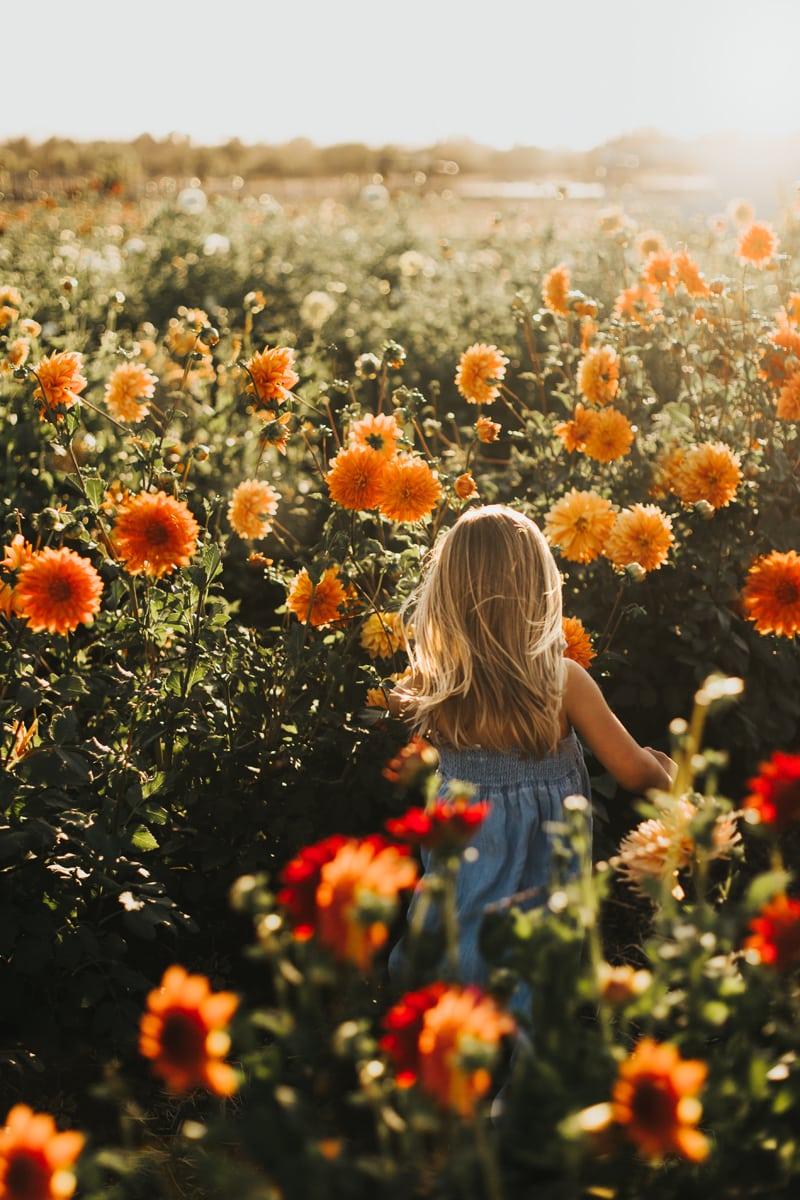 Family Photographer, little girl walking through a flower field